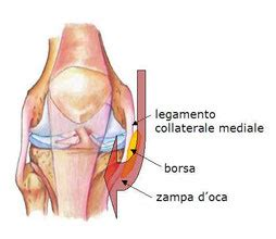 dolore ginocchio parte interna borsite della za d oca articolo da quot fisioterapista