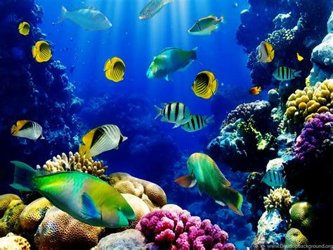 www fish live wallpaper 3d live fish wallpapers fish tank live wallpaper fish