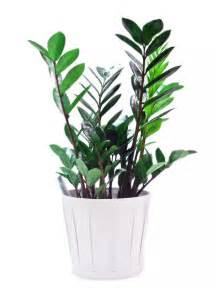 Indoor Houseplants Yubali Indoor Plants Pictures