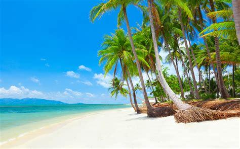 koh samui thailand tropical beach  coconut palm trees
