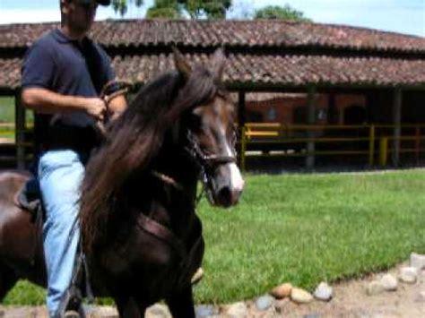 caballo de la sabana youtube fantasma de la z piel roja x fantastica montado rey