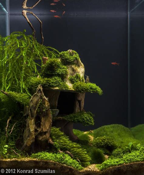 Aquascape Fish by 694 Best Planted Nano Tanks Images On