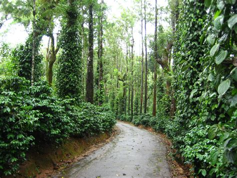 aesthetics wallpaper chennai down memory lane evergreen coorg and a recipe i2cook