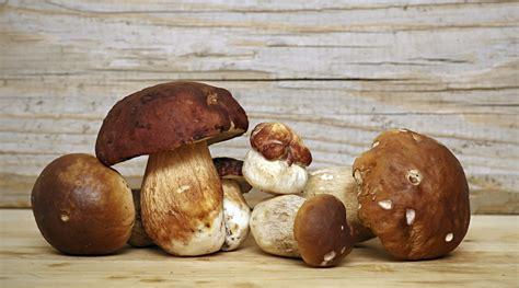 cucinare i porcini freschi 5 modi per cucinare i funghi porcini