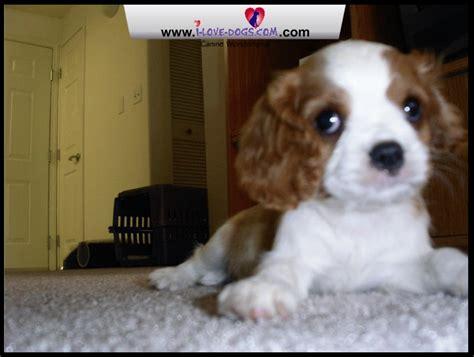 puppy screen screensaver
