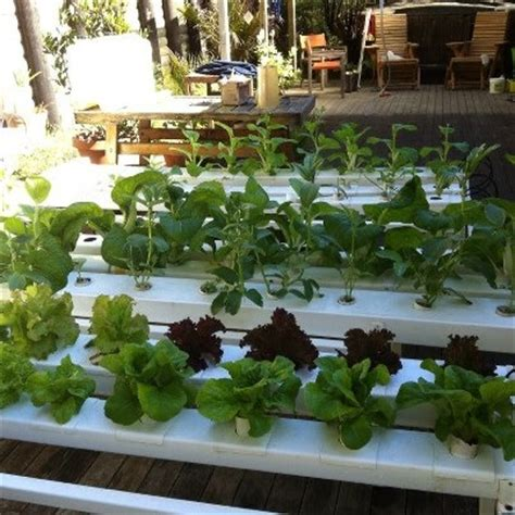 backyard hydroponics home hydroponics