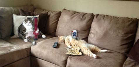 cat on a couch redditors photoshop a passed out kitten upvoted