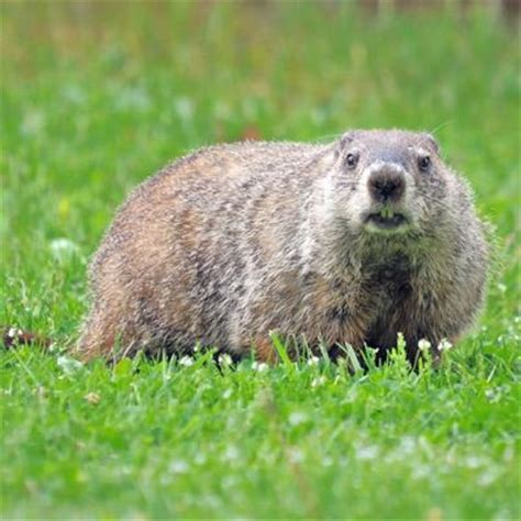 groundhog day groundhog name groundhog day quiz