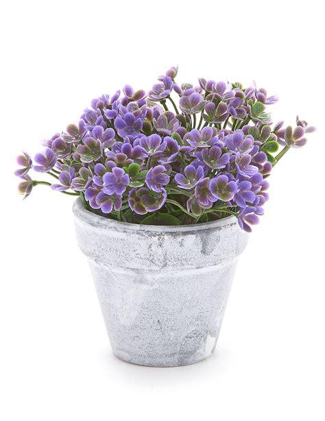 Décoration Pot De Fleur En Terre Cuite by Petit Pot Fleur Petit Pot Fleur Plantes Aeriennes Accueil