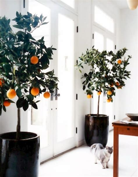 6 sweet delicious fruits you can grow indoors all year - Fruit Trees Indoors