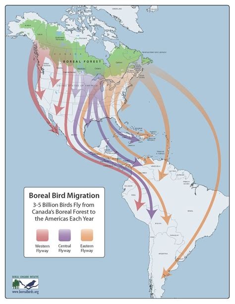 boreal bird migration 3 5 billion birds fly from canada s