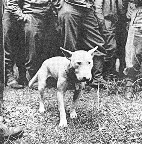 george s dogs war god patton general patton and his willie