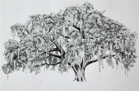 live oak painting live oak fine art print living room