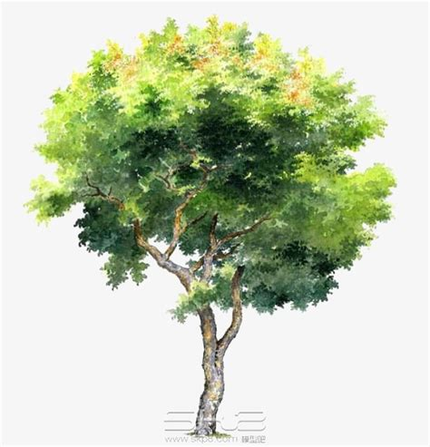 water color tree painted trees painted watercolor trees png