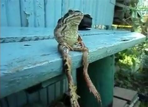 frog on bench a frog sitting on a bench like a human whatever