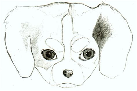 puppy pictures to draw how to draw a puppy learn how to draw puppies is
