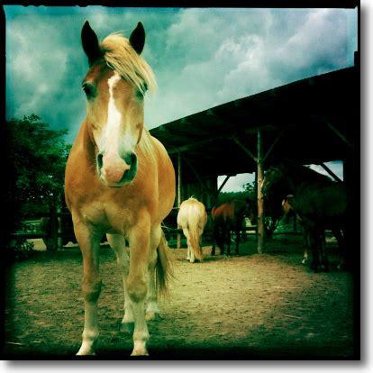 Fotos Auf Alt Trimmen by Wege Zum Pferd 187 Archiv 187 Pferdefotos Mit Dem Handy