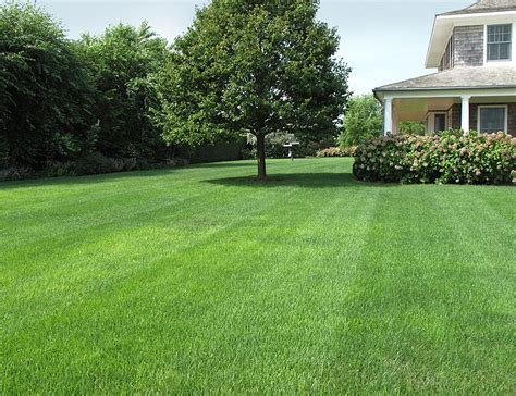 backyard garden with perfect lawn favorite places spaces pint