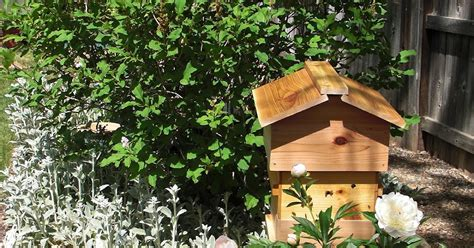 Backyard Honey Bee Hive by Backyard Bee Hive Bee Review A New Hive And A Mini