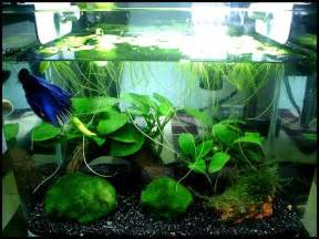 betta tank pin by darielle christman on awesome aquariums pinterest