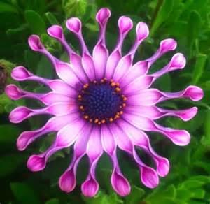 best flower best flower quotes emmy pinterest