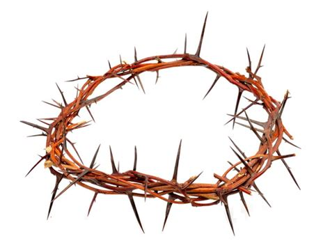 crown of thorns clipart many interesting cliparts