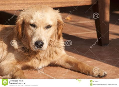 puppy fell on on fall sun lit porch floor stock photo image 47222341