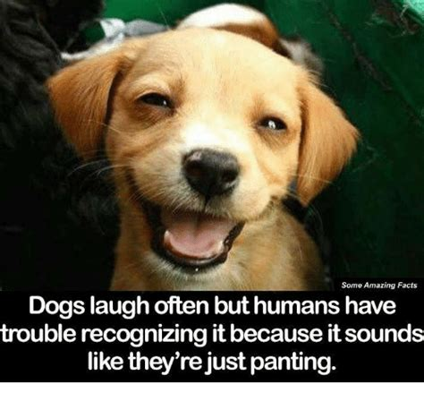 can dogs laugh dogs memes of 2017 on sizzle animals