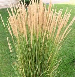 pin by nan herson on grasses pinterest