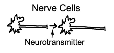 Nerve Cell Detox by Neurotransmitters What Are They And Why Should You Care