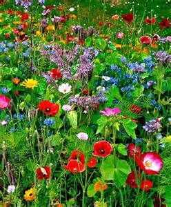 seed mat flower mix