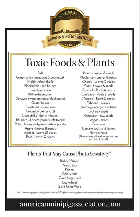 mini pig toxic plantfood list mini pigs mini pigs