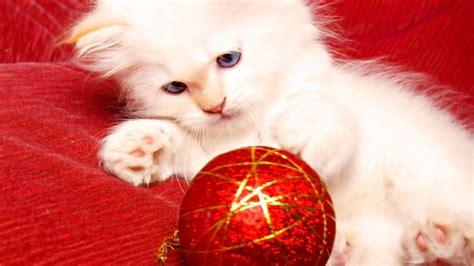 imagenes navidad gatitos im 225 genes gif de gatos y gatitos en navidad