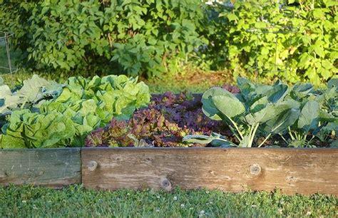 orto giardino orto giardino ortaggi orto per il giardino