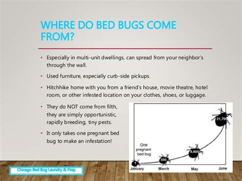 why do bed bugs come where do bed bugs come why are bed bugs so resilient connecticut scientists map
