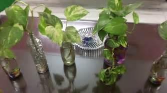grow money plant  glass bottles cheap diy interior