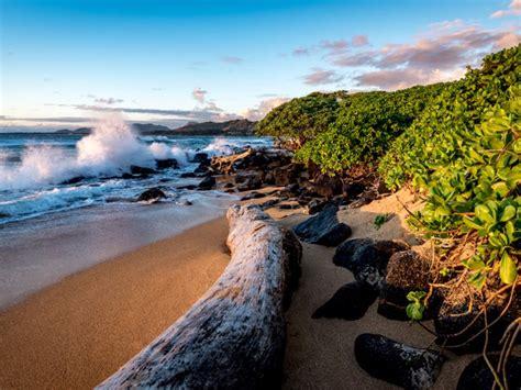 flights  hawaii  super cheap   business insider