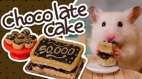 Hamster Kitchen by Hamster Safe Chocolate Cake Hamster Kitchen