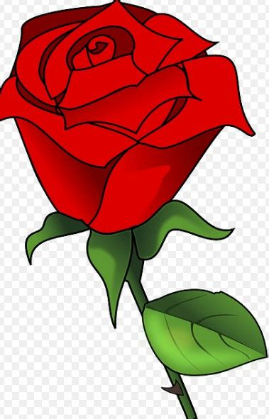 contoh gambar sketsa mawar  indah  cantik