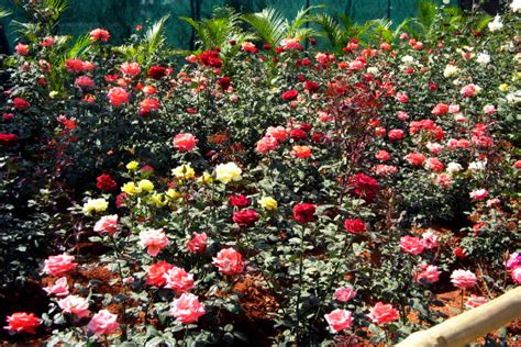 Garden Of Roses by Garden Of Roses By Soar On Deviantart