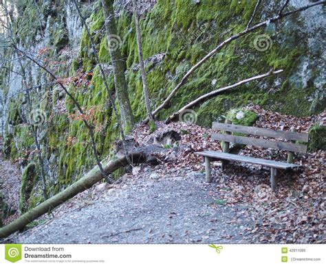 fallen tree bench lonely bench stock photo image 42811089