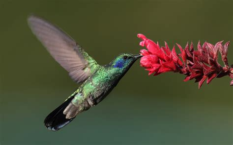 super collide hummingbirds