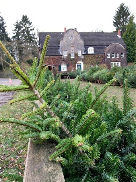 weihnachtsbaum kaufen rund um d 252 sseldorf frisch vom