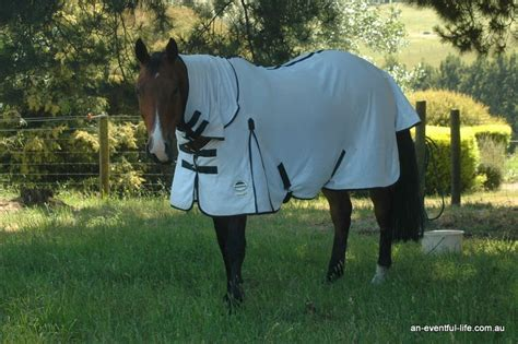 summer rugs for horses keeping your cool in weather an eventful