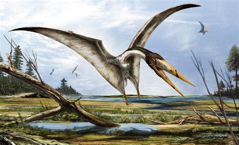 dinosauri volanti il gigante alato che cacciava dinosauri national geographic