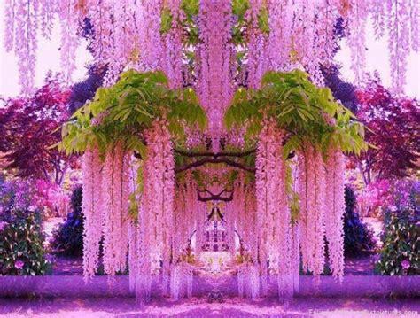 purple flower garden a purple wisteria flower garden in japan funniest pictures