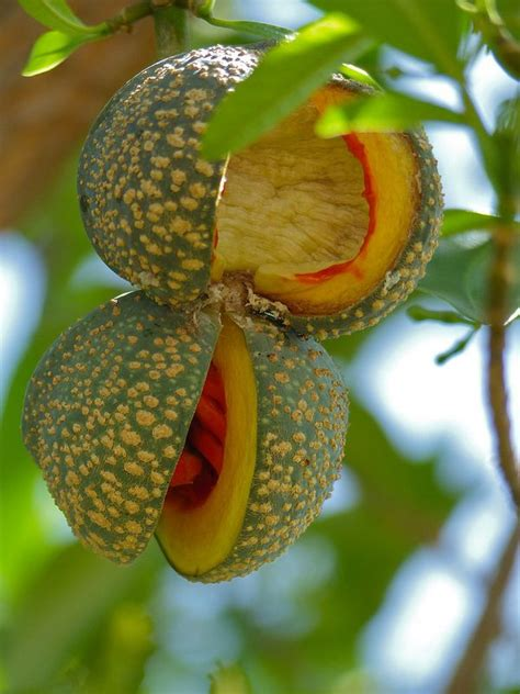 94 fruit with seeds 996 best fruit images on fruit
