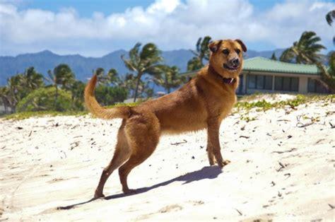 hawaiian puppy names 70 hawaiian names pethelpful