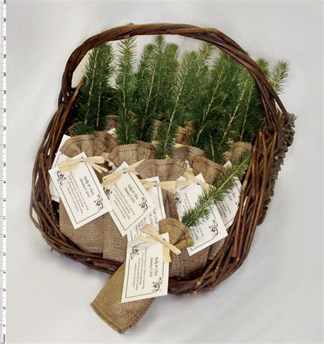 Wedding Favors Trees by Tree Seedlings Favors And Gifts For Weddings Promotional