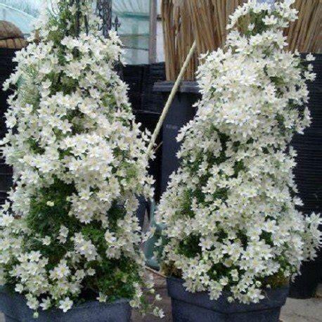 piante da vaso esterne piante da vaso sempreverdi per esterno con piante da
